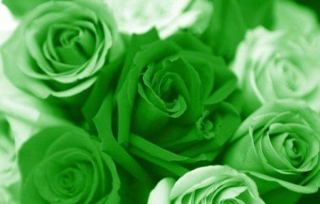 зелени рози
