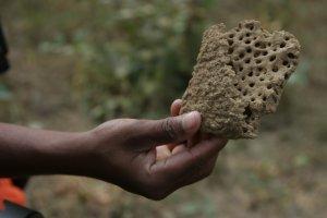 termitnik